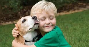 حمایت کیفری از حیوانات